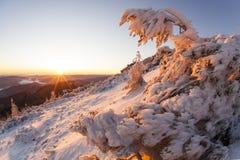 Gebogen door ijs Stock Fotografie