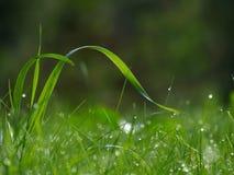 Gebogen grassprietjes met dauw, achtergrond, exemplaar-ruimte Royalty-vrije Stock Foto