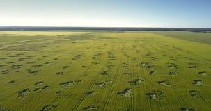 Gebogen haversegmenten op groen gebied onder duidelijke blauwe hemel stock videobeelden