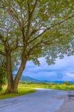 Gebogen weg binnen een natuurreservaat in Chiang Mai, Thailand stock foto's