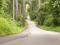 Gebogen weg in bos op heuvel Royalty-vrije Stock Afbeelding