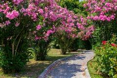 Gebogene Gasse zwischen Büschen mit rosa Blumen Die Steinblöcke wird mit den rosa Blumenblättern umfasst Im Park mit schönen Blum stockfotografie