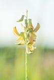 Gebogene gelbe Blumen Lizenzfreie Stockfotos