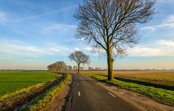 Gebogene Landstraße im ländlichen Gebiet von einem niederländischen Polder Lizenzfreies Stockfoto