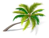 Gebogene Palme stock abbildung