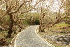 Gebogene Straße in den Bergen unter dem alten Baum. Stockfoto