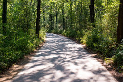 Gebogene Straße im Wald Stockfoto