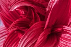 Gebogenes Rosa lässt abstrakte Beschaffenheit Feld des gr?nen Grases gegen einen blauen Himmel mit wispy wei?en Wolken lizenzfreie stockbilder