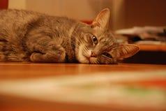 Gebohrte Katze Lizenzfreies Stockbild