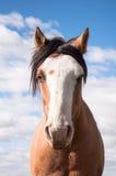 Gebohrtes Pferd Stockfotografie