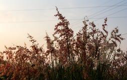 Geboorte gras Royalty-vrije Stock Afbeeldingen