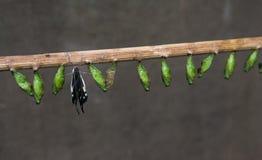 Geboorte van vlinder Royalty-vrije Stock Foto