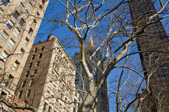 Gebouwen in New York Royalty-vrije Stock Foto's