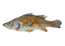 Gebraden die vissenvoedsel op witte achtergrond wordt geïsoleerd Stock Afbeelding