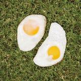 Gebraden eieren op gras. Stock Fotografie