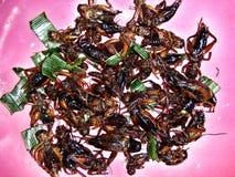 Gebraden insect Royalty-vrije Stock Fotografie