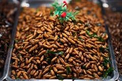 Gebraden insecten Royalty-vrije Stock Afbeeldingen