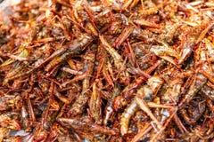 Gebraden insecten - het knapperige, Thaise voedsel van het Sprinkhaneninsect bij de markt van het straatvoedsel royalty-vrije stock foto
