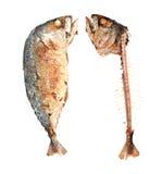 Gebraden makreelVissen Stock Afbeeldingen