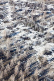 Gebrand bos na wildfire, hoogste mening Royalty-vrije Stock Foto's