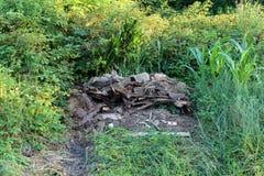 Gebrand huisvuil in het dikke groene bos omringen royalty-vrije stock afbeelding