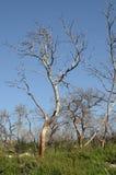 Gebrand onderaan bomen in het bos Stock Foto's