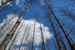 Gebrande bomen Stock Afbeelding