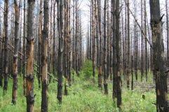 Gebrande bomen Stock Foto's