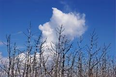 Gebrande bomen Royalty-vrije Stock Afbeeldingen