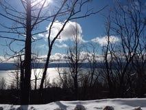 Gebrande bomen in de sneeuw stock afbeeldingen