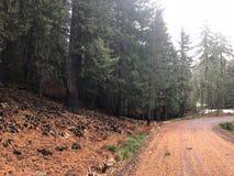 Gebrande bomen dichtbij bergweg Royalty-vrije Stock Afbeeldingen