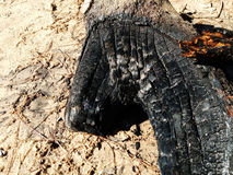 Gebrande boomstam - Tronco-quemado Royalty-vrije Stock Foto