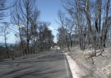 Gebrande bos en weg Stock Afbeelding