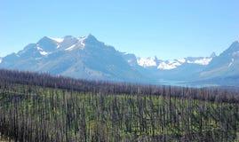 Gebrande bossen en sneeuwbergen Stock Afbeeldingen