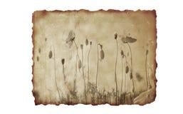 Gebrande document achtergrond met en bloemen Stock Fotografie