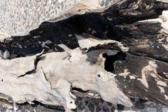 Gebrande houten boomstam royalty-vrije stock afbeelding