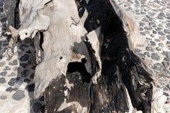 Gebrande houten boomstam stock foto's