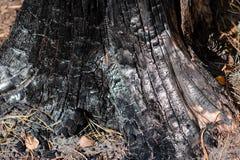 Gebrande houten textuur royalty-vrije stock afbeeldingen