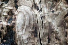Gebrande schil van boom 3 Stock Foto's