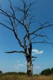 Gebrannte Bäume Lizenzfreie Stockfotografie