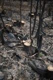 Gebrannte Bäume Portugals Wald Lizenzfreies Stockbild