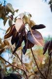 Gebrannte Blätter Stockfotos