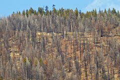 Gebrannte Bäume Stockfoto