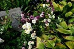 Gebrannte grüne Blätter, weiße und purpurrote Blumen und Stein weg Stockfotos
