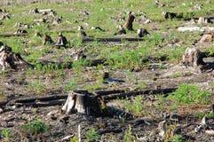 Gebrannte Wälder Stockfotos
