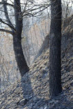 Gebrannte Waldausdehnung bei Griechenland Lizenzfreies Stockbild