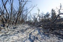 Gebrannte Waldausdehnung bei Griechenland Stockfoto