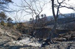 Gebrannte Waldausdehnung bei Griechenland Stockfotos