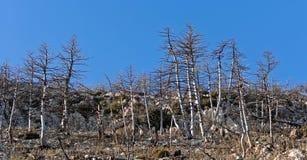 Gebrannte Waldlandschaft Stockfoto