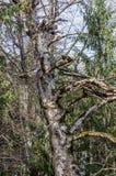 Gebrannter Baum Lizenzfreies Stockbild